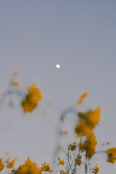 maanopkomst