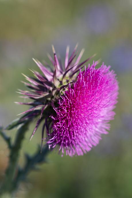 Macro Bloemen 5