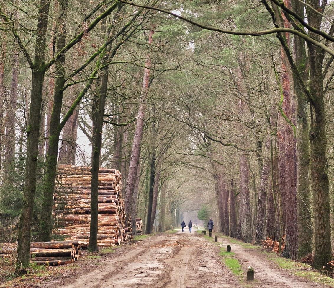 De paden op, de lanen in.... - - - foto door hanshoeben51 op 20-01-2021