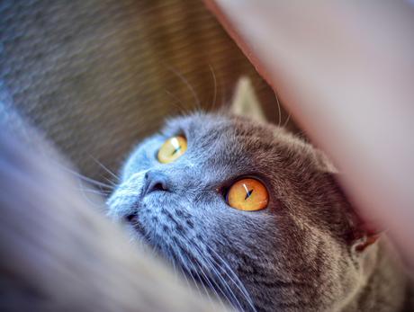 de ogen van Max