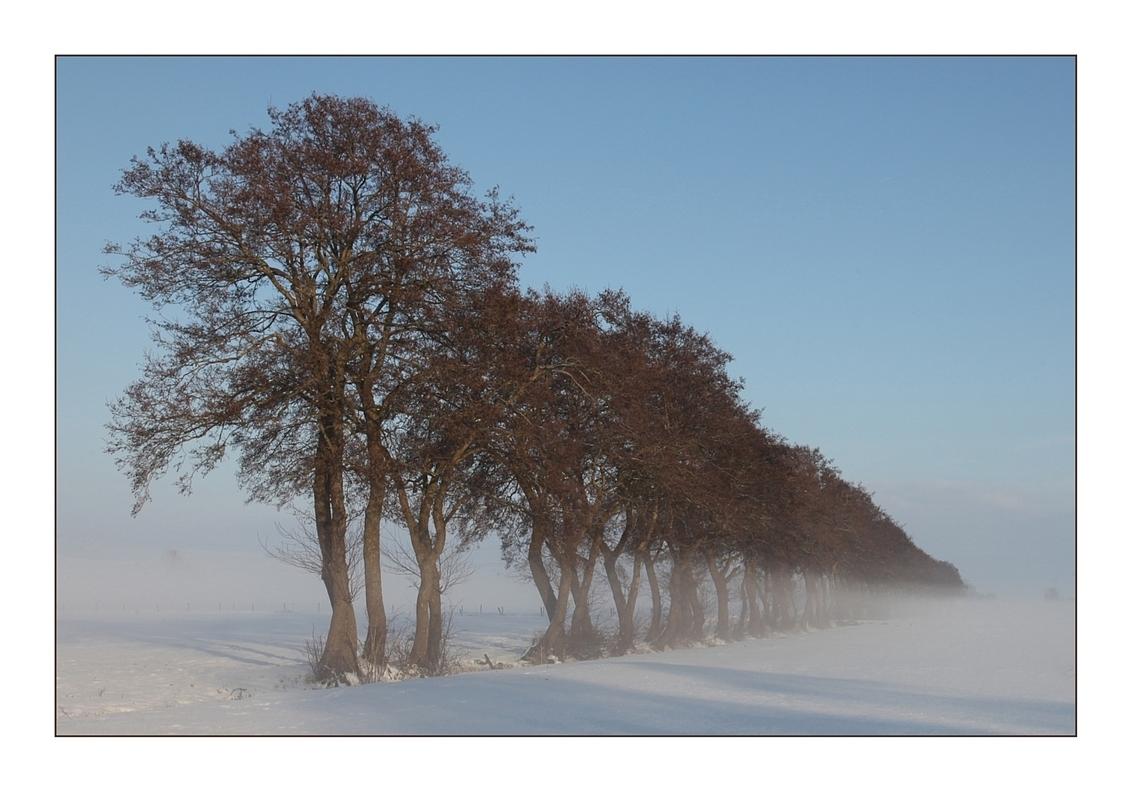 Dancing trees - - - foto door PhotoparR op 16-02-2010 - deze foto bevat: sneeuw, bomen