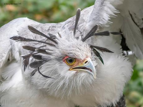 One Angry Big Bird
