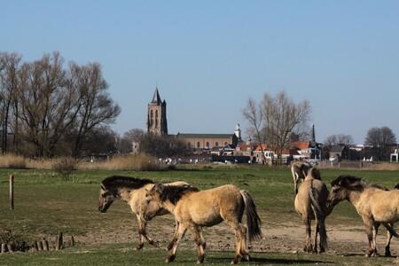 op het gemak - konikspaarden struinen door de groesplaat - foto door TMQ op 12-04-2021 - locatie: 1631 Oudendijk, Nederland - deze foto bevat: konikspaarden, natuur, lucht, fabriek, boom, werkend dier, natuurlijk landschap, landschap, gras, terrestrische dieren, grasland, gewoon
