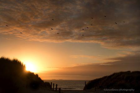 zonsondergang over Ameland - zonsondergang op Ameland - foto door dewollewei op 21-07-2015 - deze foto bevat: strand, zee, licht, avond, zonsondergang, landschap, duinen, ameland, hollum