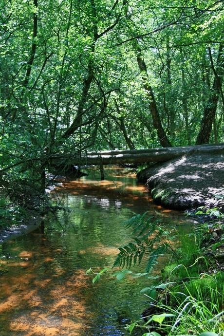 stream of gold