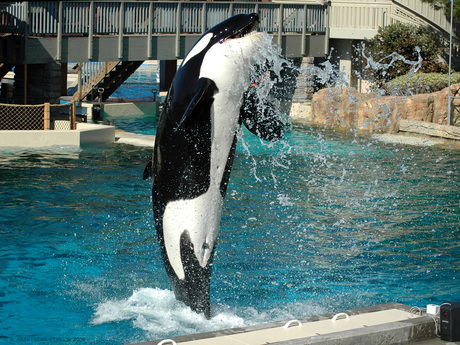 Free Willy ! ! !