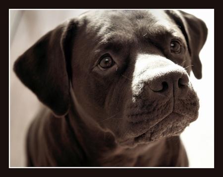 zonnetje op mijn neus - - - foto door marijvdmeijs op 27-03-2009 - deze foto bevat: zon, dieren, hond, tilburg, senna