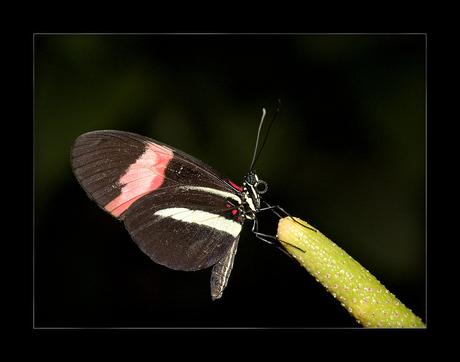 Vlindertuin No 7