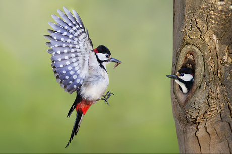 The Return of the Woodpecker