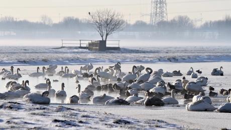 Winter in Wingerde