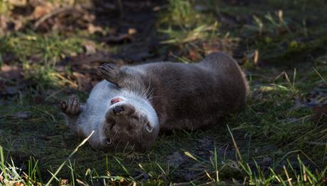 Vrolijke Otter is aan het genieten