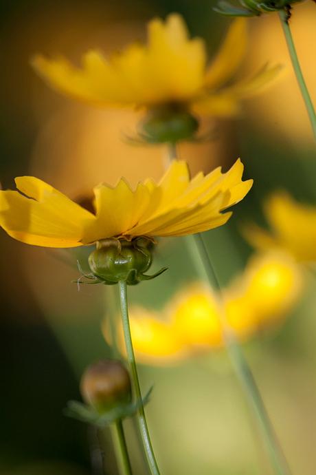 Geel en groen