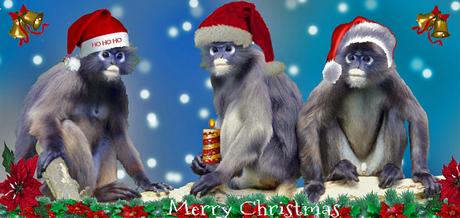 Ho,ho,ho Merry Christmas !!!