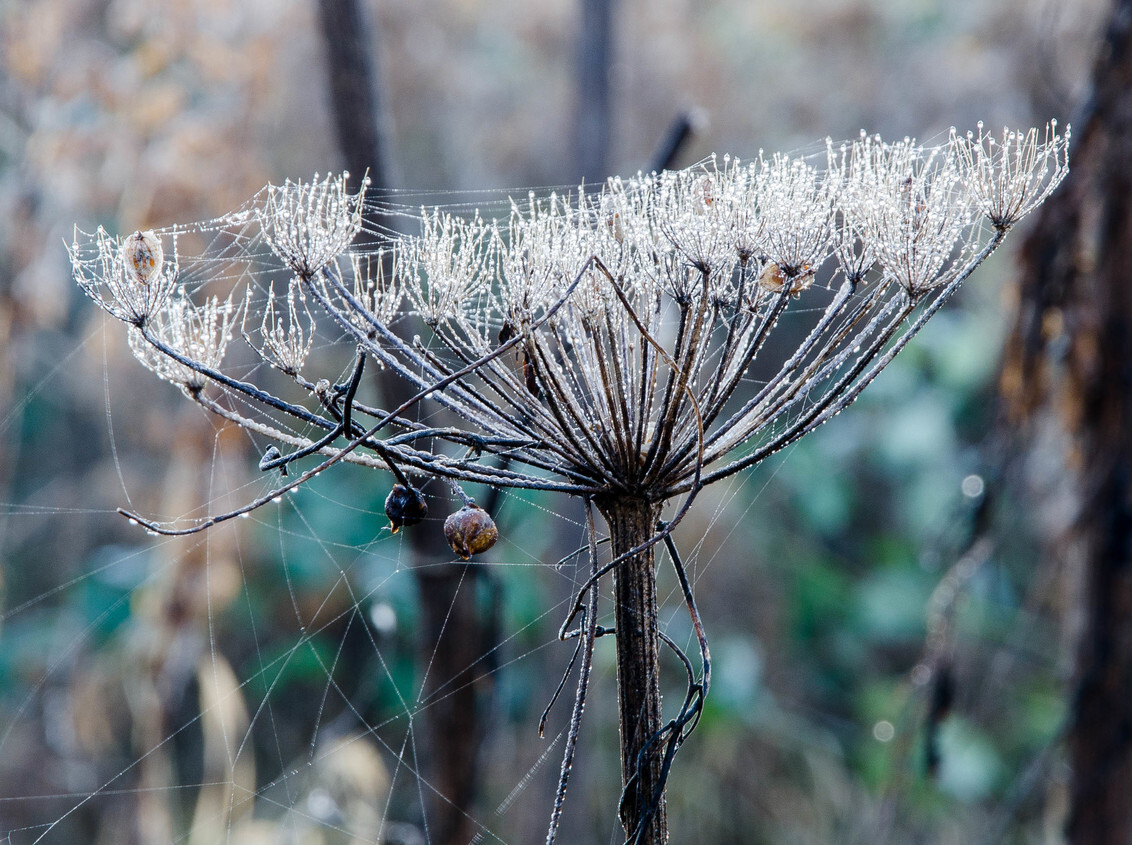 Rijp - - - foto door yos-jensen op 31-12-2016 - deze foto bevat: bloem, rijp, winter, landschap
