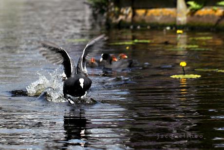 Lopen over water