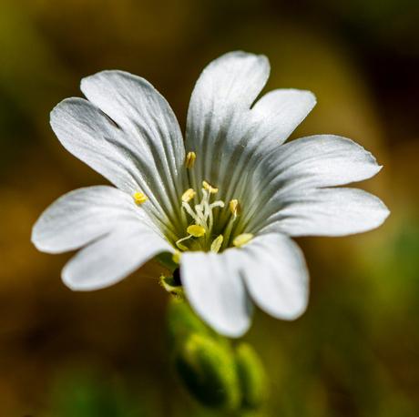 Wit bloempje