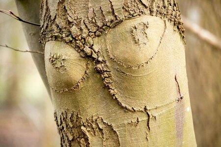 Boebies - Deze boom had iets bekends - foto door bertus52 op 06-03-2021