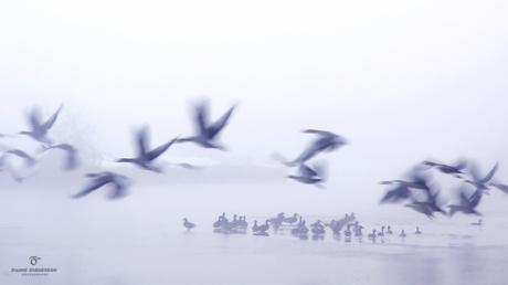 Birds in the winter...