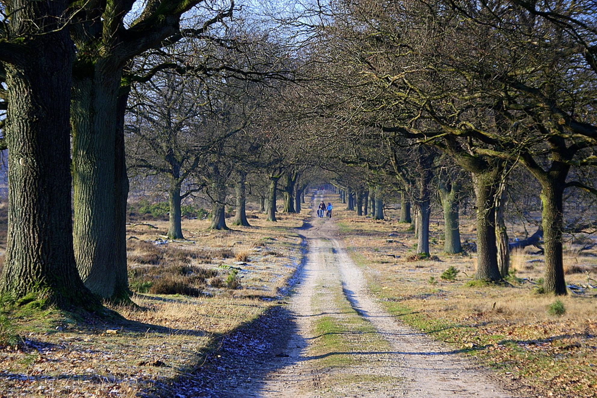 Deeler woud 2 - - - foto door theoluising op 12-03-2009 - deze foto bevat: theo, grillig, woud, deeler, luising - Deze foto mag gebruikt worden in een Zoom.nl publicatie