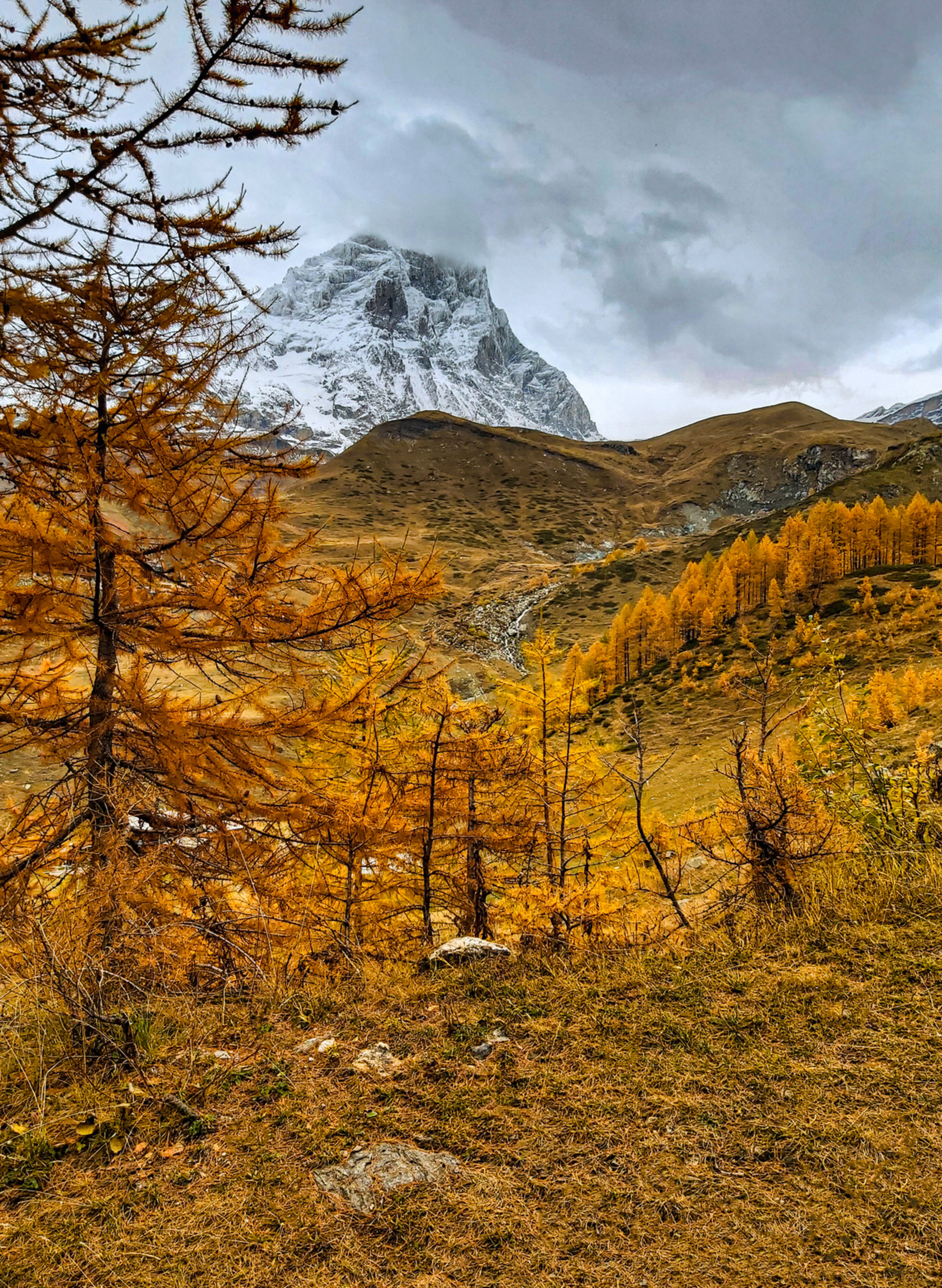 Matterhorn bij Breuil-Cervinia - De imposante Matterhorn liet zich net niet helemaal zien, maar het grijze weer contrasteert mooi met de oranje-gele  herfstkleuren die zelfs in de na - foto door roybisschops op 25-10-2019 - deze foto bevat: herfst, bergen, herfstkleuren, alpen, naaldbomen, matterhorn