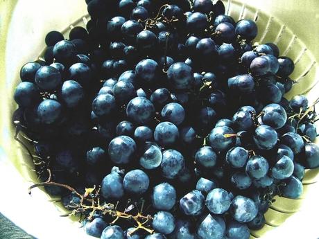 De laatste druiven in het zonnetje