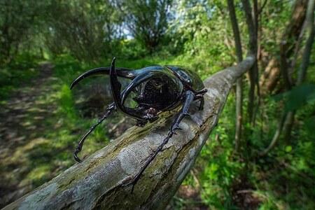 Beetle.. - ff erop uit geweest met de laowa15mm wide angel Macro - foto door marcojongsma op 05-05-2020 - deze foto bevat: groen, macro, wit, bloem, water, natuur, kever, geel, licht, tuin, tulp, zwart, tegenlicht, zomer, insect, vlindertuin, bokeh