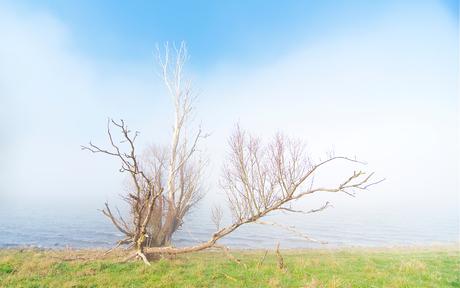In de mist 1