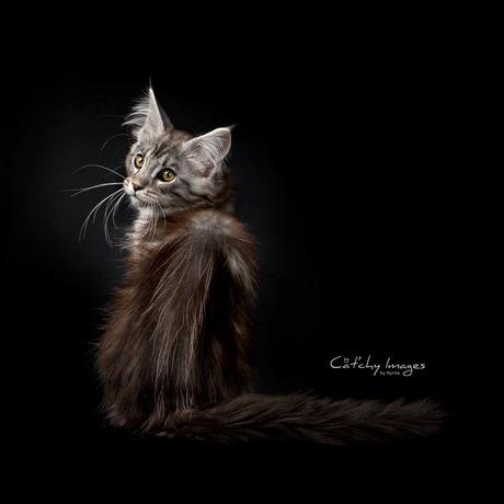 The Art of Kitten