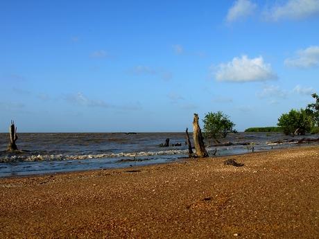 Coast of Suriname