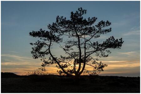 Backlit - - - foto door fred-stevenson op 04-03-2021 - deze foto bevat: natuur, avond, zonsondergang, duinen, bomen