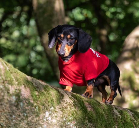 foto bokrijk Honden FB004