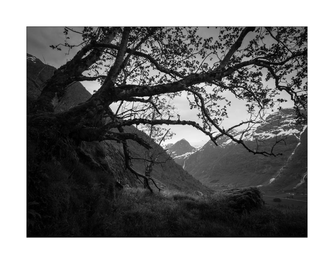 Unravel - - - foto door Joshua181 op 13-08-2017 - deze foto bevat: natuur, vakantie, landschap, bomen, bergen, noorwegen, zwartwit