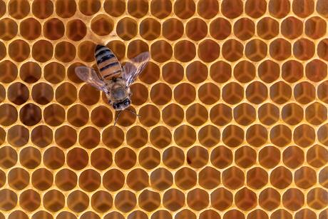 Bij op bijenraat