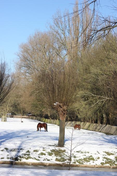 002 - delft houd gemaakt - foto door ltomey op 13-02-2021 - deze foto bevat: paarde