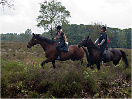 Tijdens de Paardenvierdaagse in Epe...