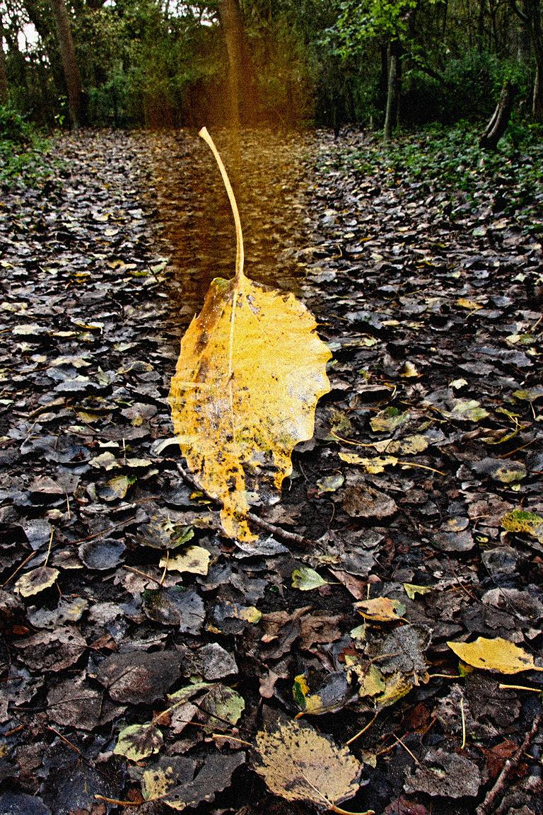 Herfst - - - foto door janwb op 28-10-2008 - deze foto bevat: herfst, blad, vallen, vallend