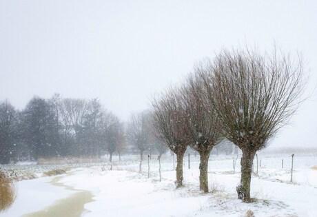 Tolpad in de winter