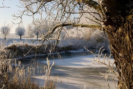 Winter Biesbos