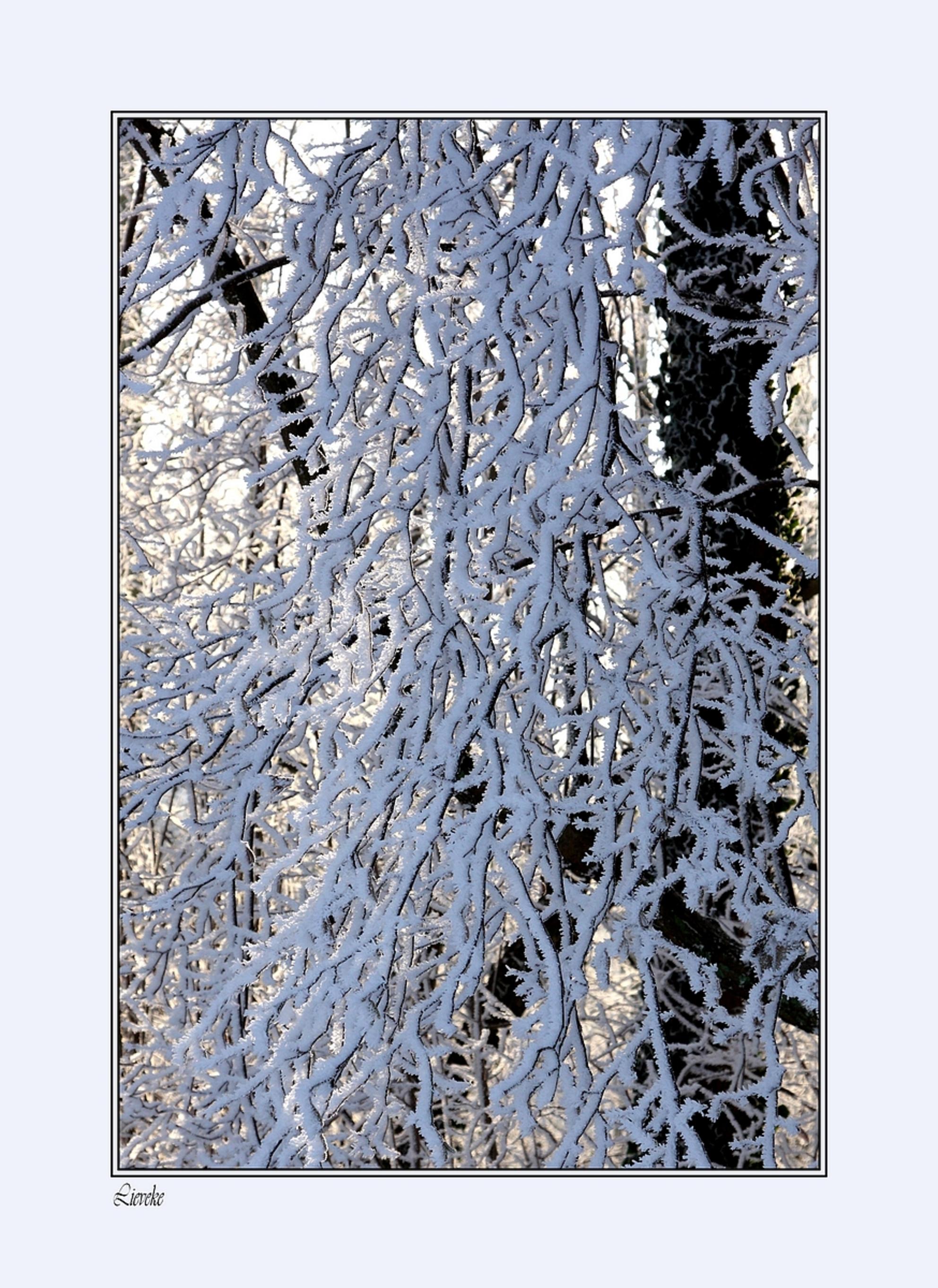 Winter - 9 januari 2009  Canon EOS 40D  Tv(Shutter Speed)  1/250Sec. Av(Aperture Value)  F8.0 ISO   320 Exposure comp.  + 1/3 Lens  EF24-105mm f/4L IS  - foto door lieveke_zoom op 25-01-2009 - deze foto bevat: wit, boom, rijp, winter, takjes, lieveke - Deze foto mag gebruikt worden in een Zoom.nl publicatie