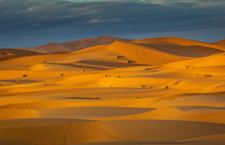 De lege woestijn