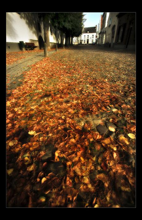 Herfstbladeren .....