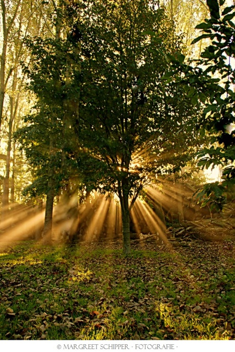 Door de bomen de zon zien.