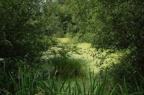riviertje de Swalm