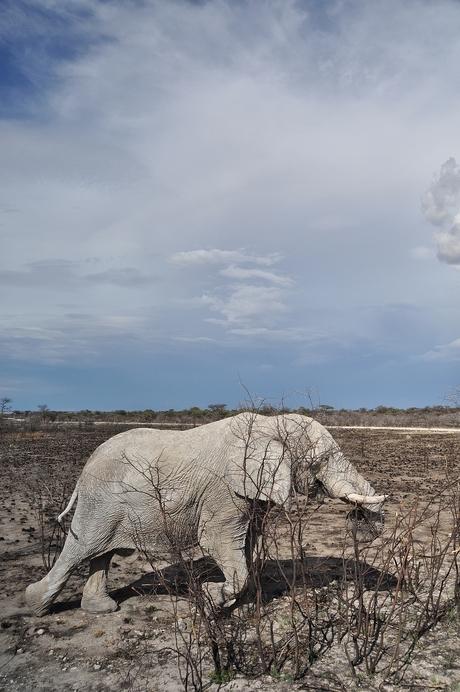 De oude man en de savanne