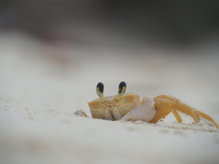 Kiekeboe - Half uur zitten wachten tot ie weer uit zijn holletje kwam. Geduld wordt beloond. Leuk als dingen lukken. - foto door langeman1969 op 21-06-2019 - deze foto bevat: zee, klein, krab, wildlife, curacao