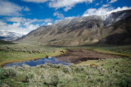 Weidse omgeving van Rocky Mountains