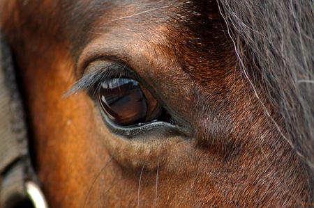 Nummer *500* - Hoi hoi..  mijn 500ste uploading... wil iedereen bedanken die mij steeds gevolgd heeft.. en degene die mij steeds tips gaven erg bedankt. deze fo - foto door @Linda op 24-06-2008 - deze foto bevat: paarden, paard, dieren, oog, magic, paardenoog, zoogdier, -linda