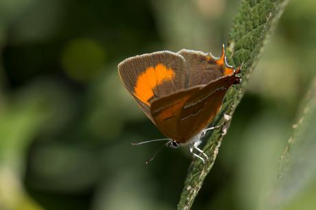 Droomsoort in eigen tuin