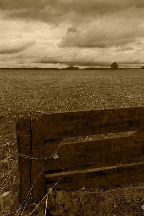 Het veld bij Hijken.