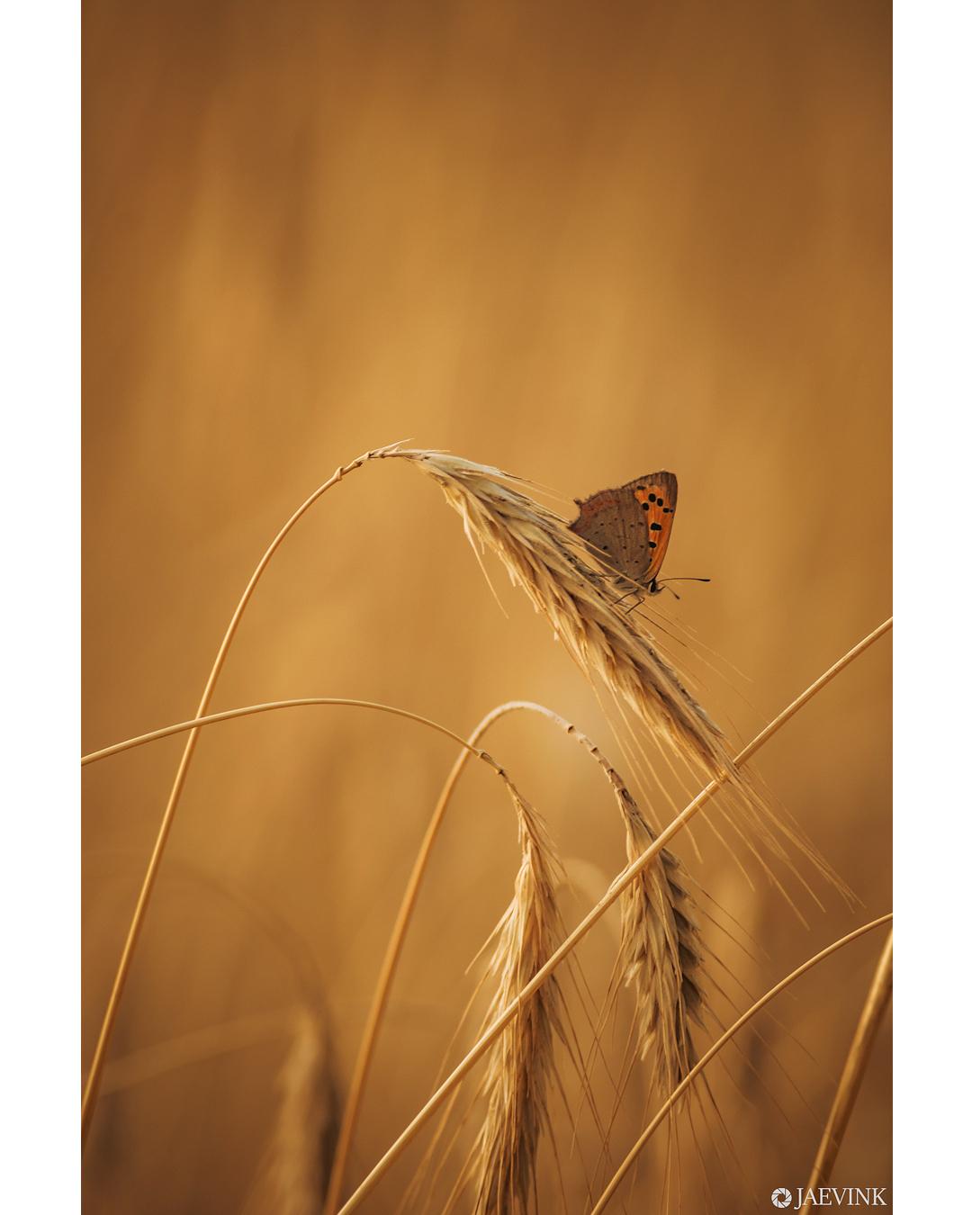 Colormatch - Colormatch - foto door vwinke op 15-04-2021 - deze foto bevat: vlinder, butterfly, macro, licht, lente, natuur, bestuiver, geleedpotigen, insect, vlinder, takje, motten en vlinders, natuurlijk landschap, fabriek, gras, vleugel